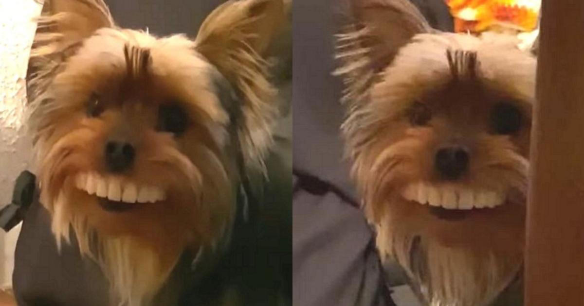 ireba.png - 【じわじわ】自身の入れ歯が突然無くなり探していた際に飼い犬の姿を見た瞬間…