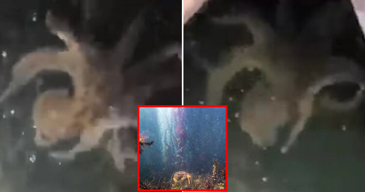 octopus3.png - Octopus Spotted In Venice's Canals After Rare Sighting Of Jellyfish As Coronavirus Lockdown Cleared The City Of Pollution And Boats