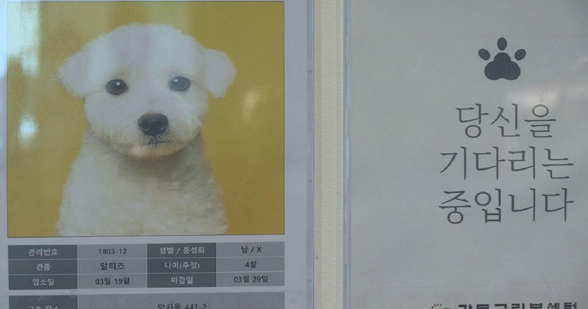 11111 3.jpg - 긴급재난지원금으로 강아지 분양 권장하는 펫숍