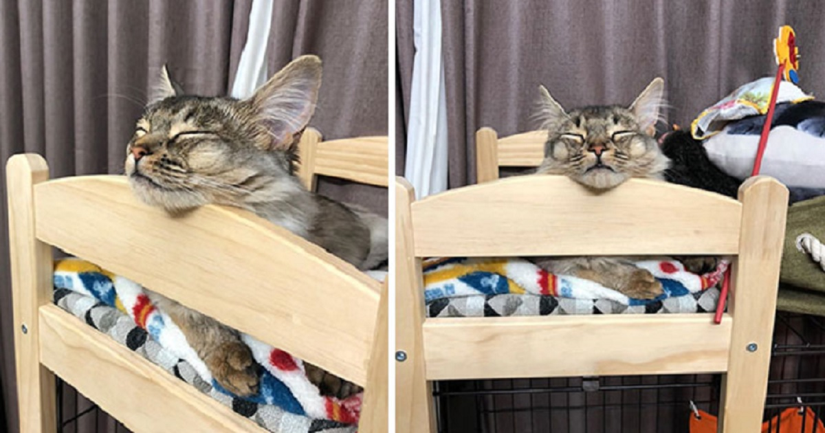 c13.jpg - People Are Buying IKEA Doll Beds For Their Cats And It's Absolutely Adorable
