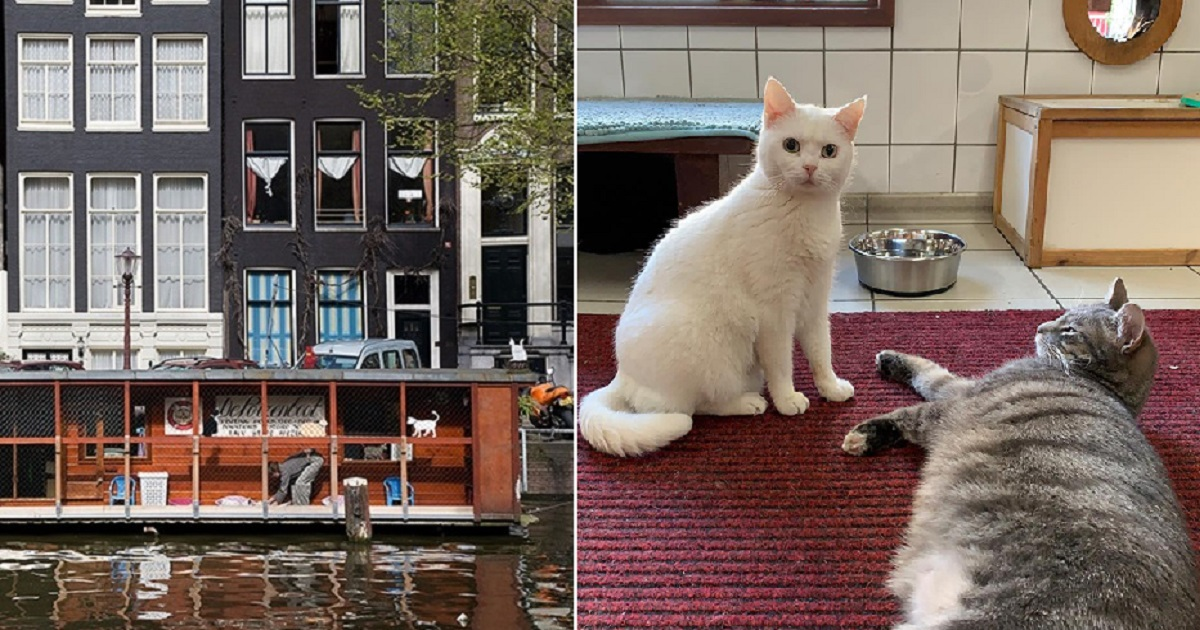 "c4.jpg - ""De Poezenboot"" In Amsterdam Is The World's First (And Only!) Floating Cat Sanctuary"
