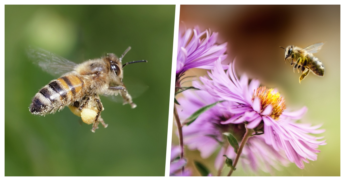 collage 11.jpg - Bees Are Likely To Repopulate As Human Activity Reduces But Scientists Ask Citizens To Help Gather Data
