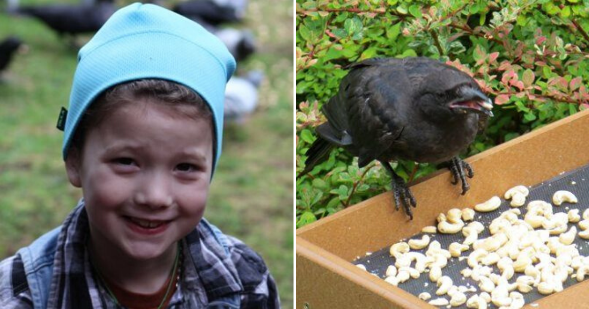 crows6.png - 8-Year-Old Girl Receives Gifts From Crows She Has Been Feeding For Years
