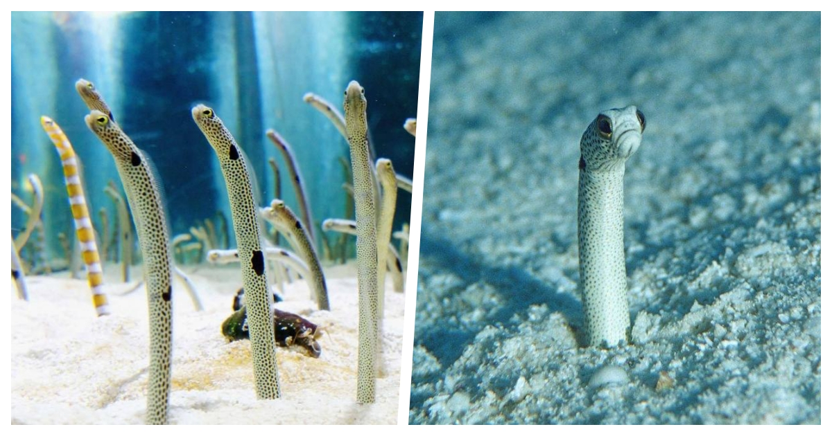 eels cover.jpg - An Aquarium Wants You To Have A Video Conference Call With Its Garden Eels