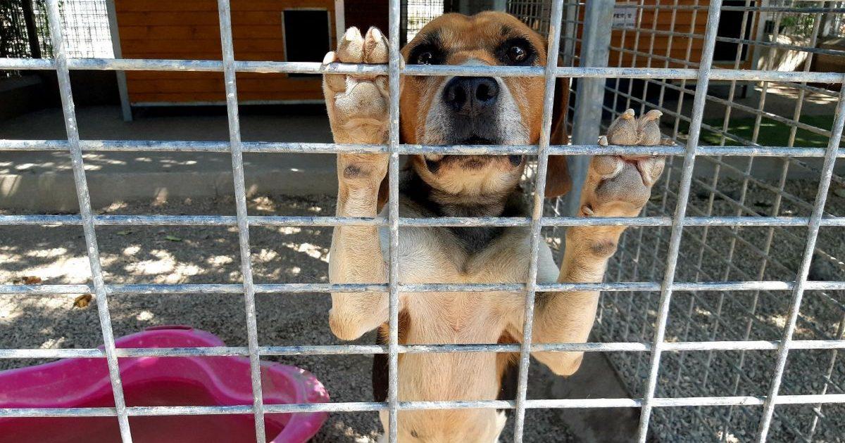france 3 regions 7 e1590742124222.jpg - Les refuges et associations de protection animale lancent un appel au secours