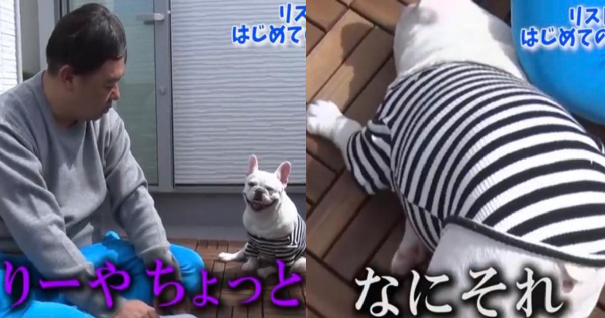 inugoya.png - TKO木下、愛犬のために犬小屋制作も批判殺到「作り方雑すぎ」「動物虐待じゃん」