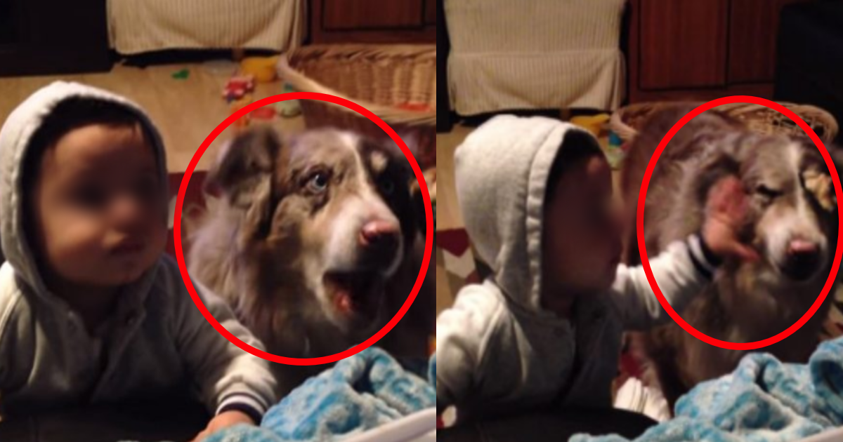 inumama.png - おやつ目当てで子どもが目を光らせるもそれに便乗するように「ママ」と発した飼い犬が話題に?