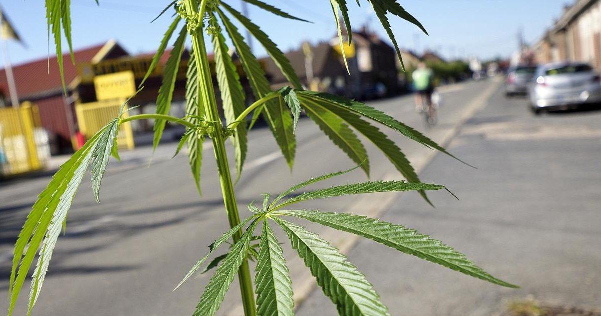 la voix du nord 15 e1590838492711.jpg - Fumeurs de cannabis : Un dispositif d'amende forfaitaire sera expérimenté