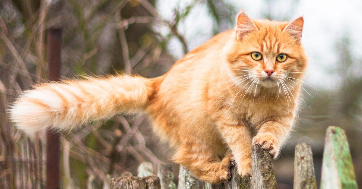 most cat owners think they cant stop their pet from hunting wildlife e1589390091523.jpg - Propos chocs : Au nom de la biodiversité, le patron des chasseurs propose de tuer les chats errants