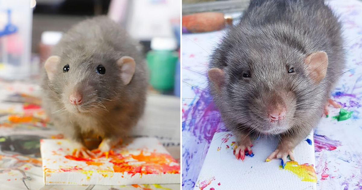 rats7.png - Talented Rats Create Tiny Paintings And Their Beautiful Work Is Sold Out!