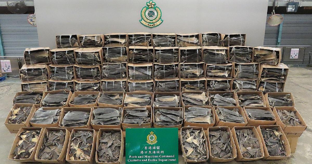 s3 2.jpg - Hong Kong Customs Scored Biggest Bust In The Region Seizing Fins From 38,500 Endangered Sharks