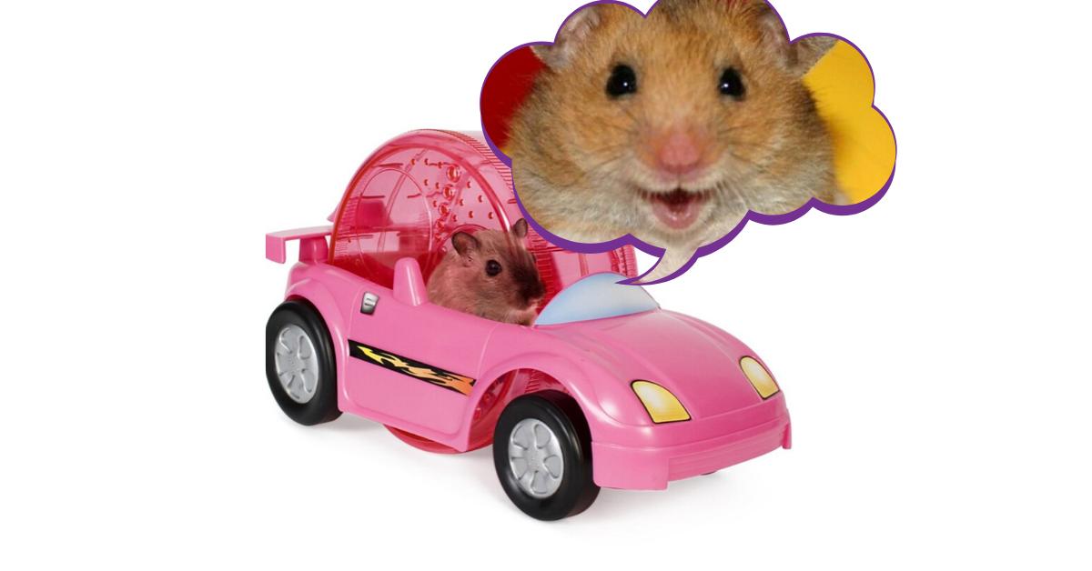 september 5 2016 arcadia football field 6 00 pm 1.png - Découvrez la voiture pour Hamster, pour qu'il arrête de courir dans le vide