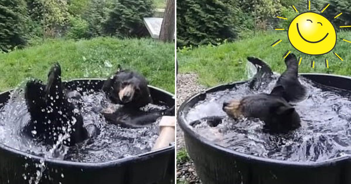 takoda4.png - Adorable Bear Named Takoda Enjoys Splashing Around In A Tub Filled With 'Cold Water'