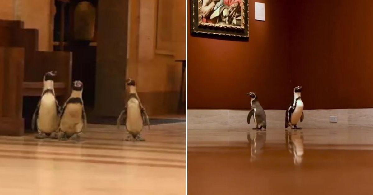 untitled design 3 7.jpg - A Group Of Penguins Visited An Art Museum During Lockdown
