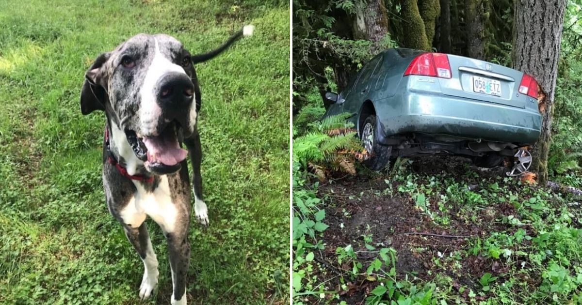 untitled design 4 12.jpg - Woman Credits Her Dog For Saving Her Life After A Car Crash