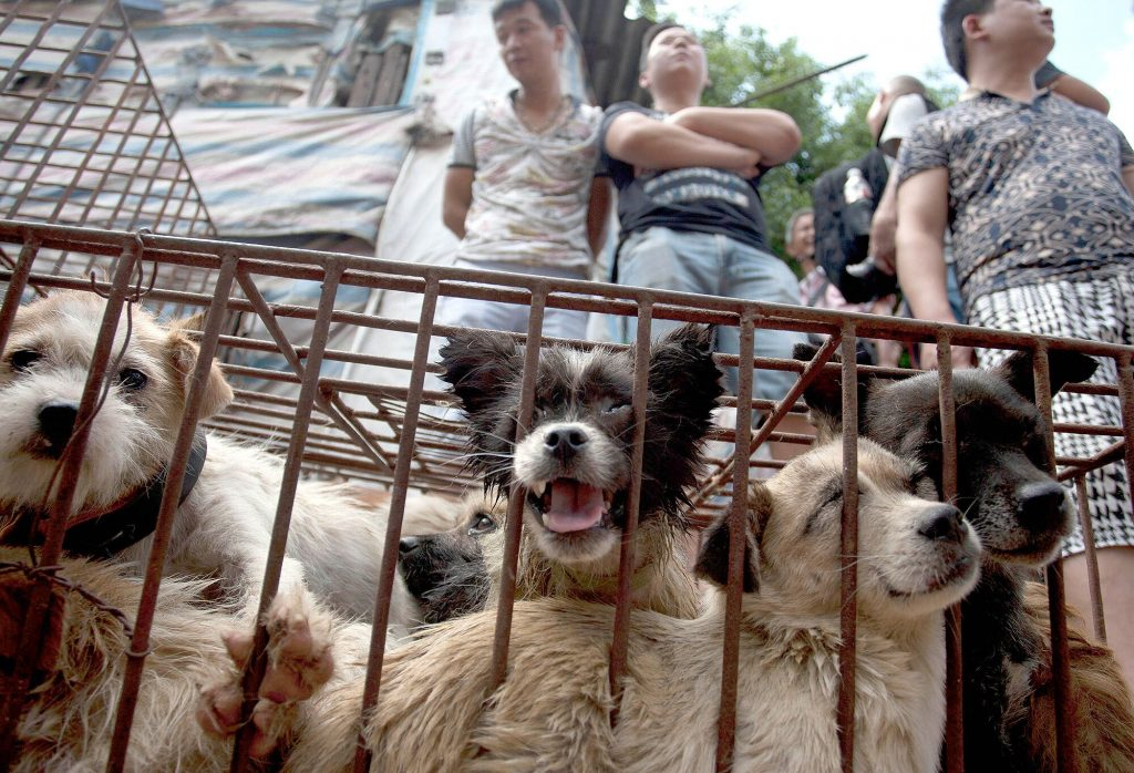 Yulin Dog Meat Festival Begins in China | PEOPLE.com