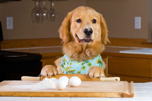 can dog eat eggs