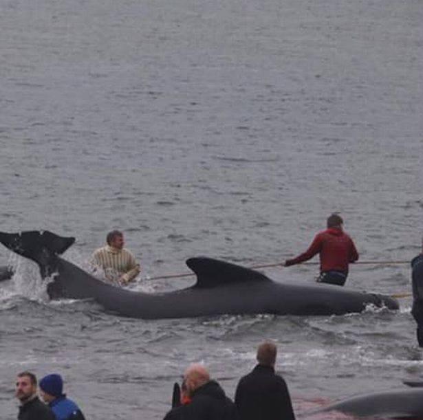Credit: Sea Shepherd/vp.fo