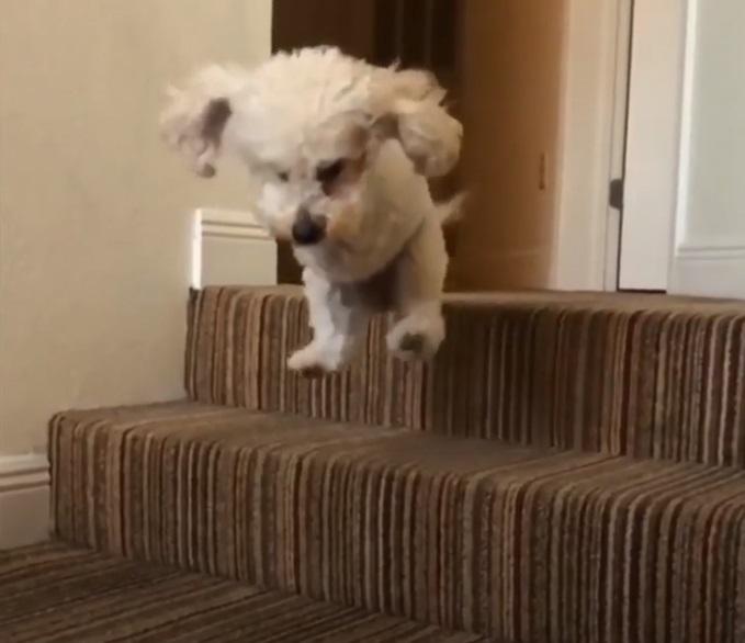 Abandoned Dog With Broken Legs Learned How To Hop Like A Kangaroo *** Несчастная брошенная собака со сломанными ногами научилась прыгать, как кенгуру