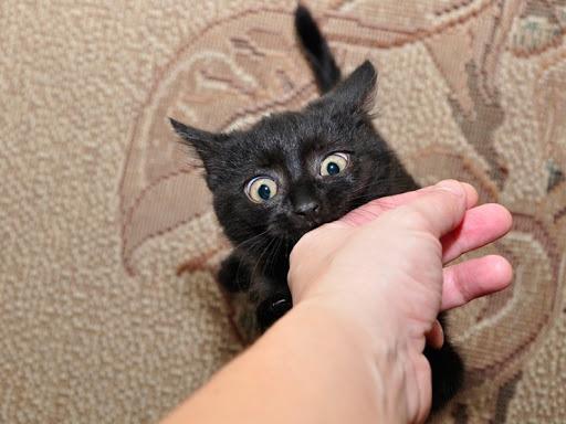 고양이가 쓰다듬어 주는 손을 갑자기 무는 이유? : 네이버 블로그