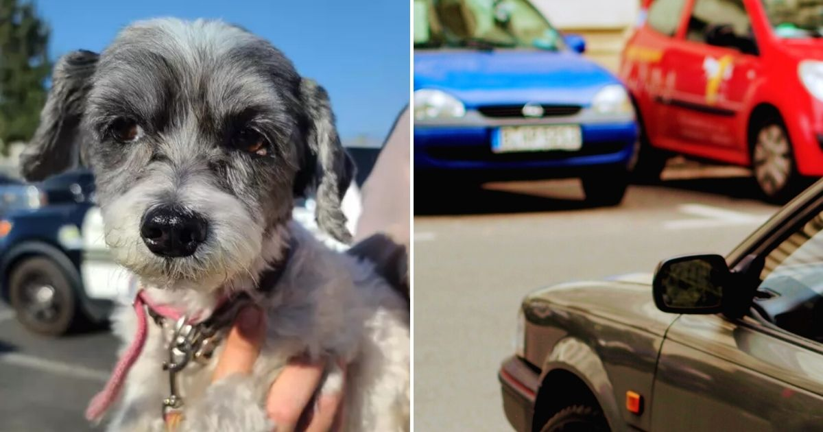 boomer.jpg - Dog Barked At The Top Of His Lungs Until He Was Saved From Scorching Hot Car