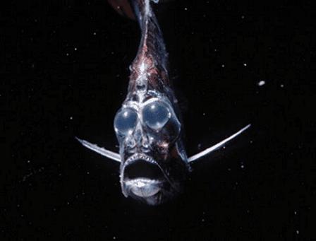 deepest ocean fish