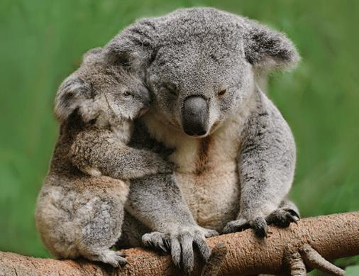 animals that hug