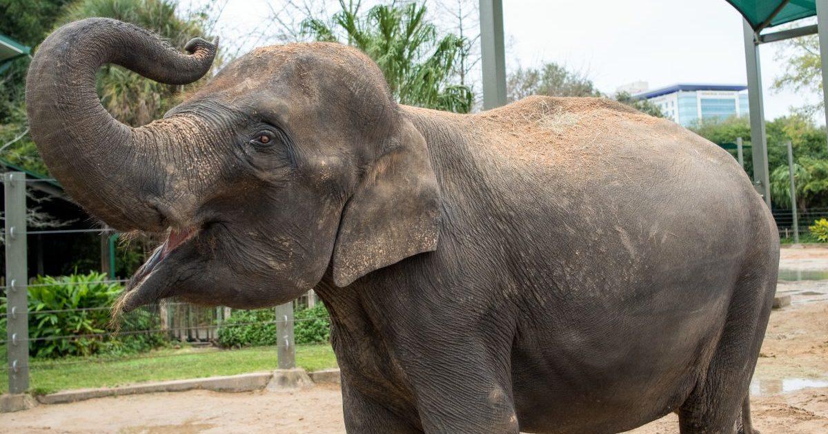 houston zoo e1614353062248.jpg - Espagne : D'un coup de trompe, un éléphant tue un gardien de zoo