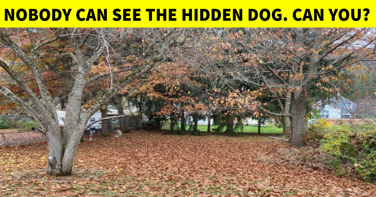 4 53.jpg - Wake Up Your Mind In Less Than 10 Seconds | Can You Spot The Hidden Dog?