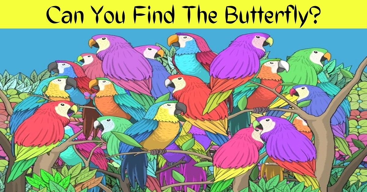 can you find the butterfly.jpg - 90% Of People Couldn't See The BUTTERFLY Hiding Among Colorful Parrots! But Can You?