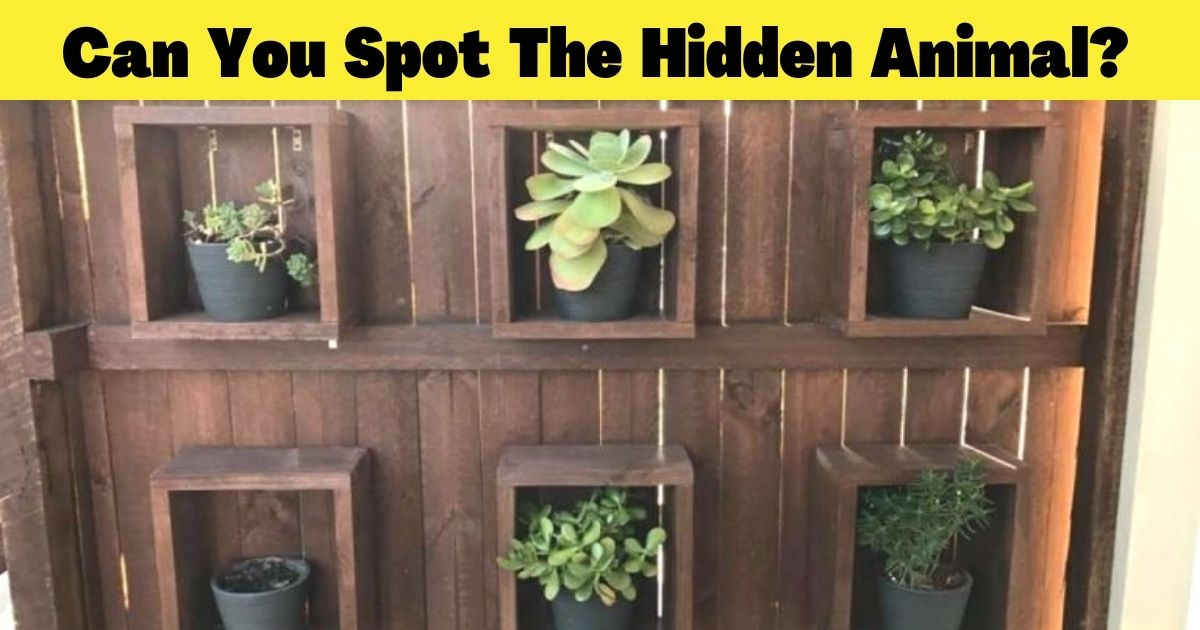 can you spot the hidden animal.jpg - There Is A Giant Animal Somewhere In This Photo – But Can You Find It In Less Than 30 Seconds?