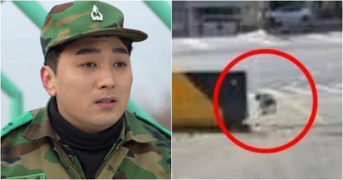 "collage 483.png - ""부대에 자꾸 출몰하는 똥깨 2마리를 내쫓았는데 알고보니 이런 강아지였습니다… 어떡하죠…?"""