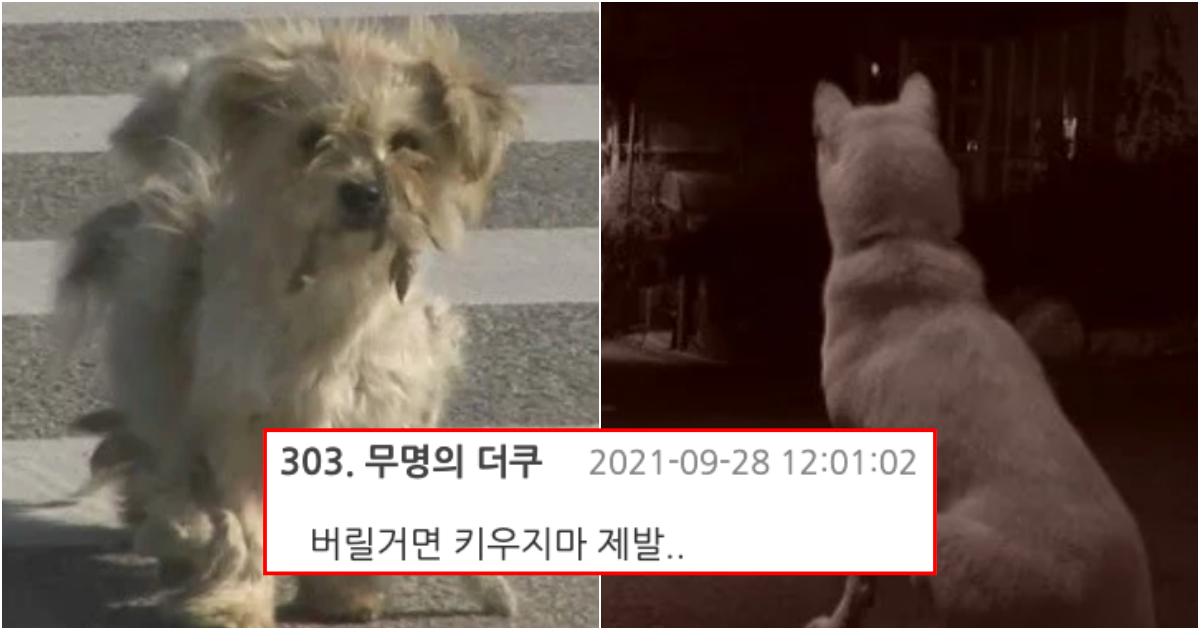 collage 557.png - 사람은 절대 이해하지도 이해할 수도 없다는 강아지들이 버려질 때의 심리