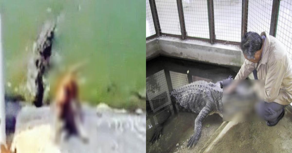 dog 4.png - [動画あり]目の前でワニにペットを食べられた…○○でワニの口を開けて死闘を繰り広げた70代の飼い主の結末は⁉