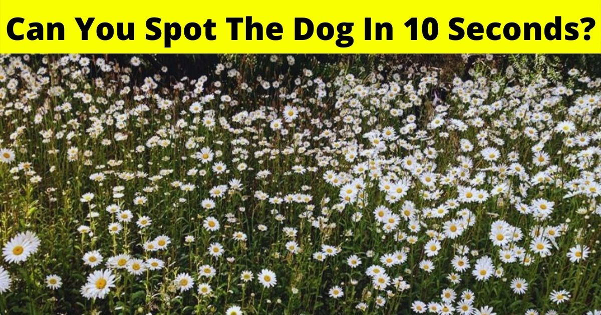 dog6.jpg - Eye Test: Can You Spot The Dog Hiding In This Photo Of Flowers In 10 Seconds?