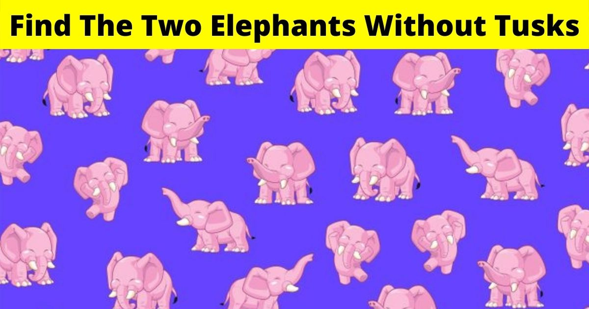 elephants4.jpg - There Are Two Elephants Without Tusks Hiding In This Picture! Can You Spot Them?