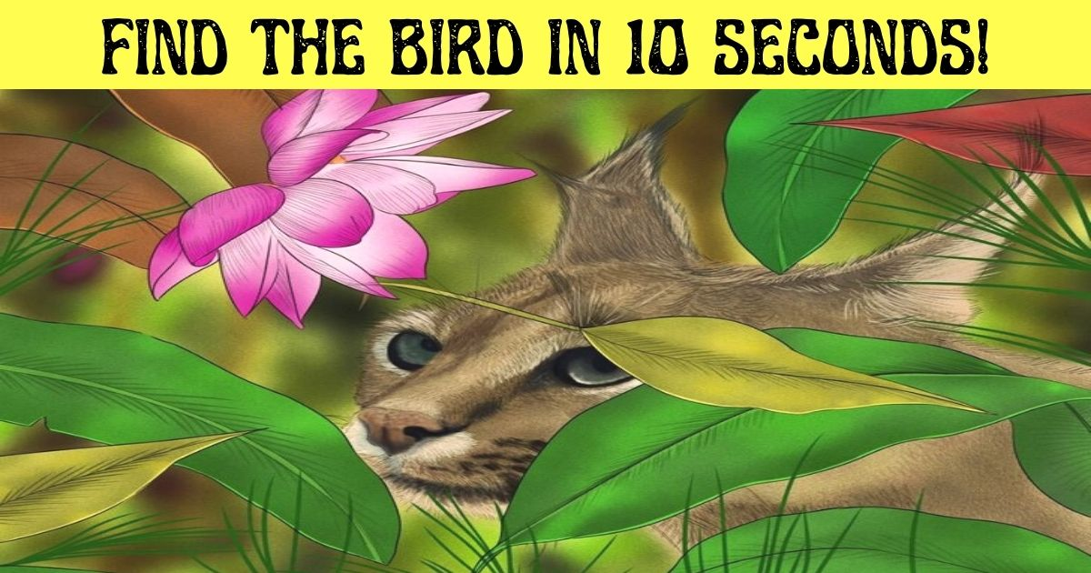 find the bird in 10 seconds.jpg - How Fast Can You Spot The Hidden Bird In This Picture Of A Wild Cat?