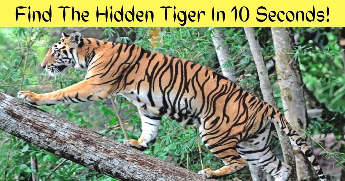 find the hidden tiger in 10 seconds 1.jpg - 90% Of Viewers Couldn't Spot The Hidden Tiger In This Photo! But Can You Find It?
