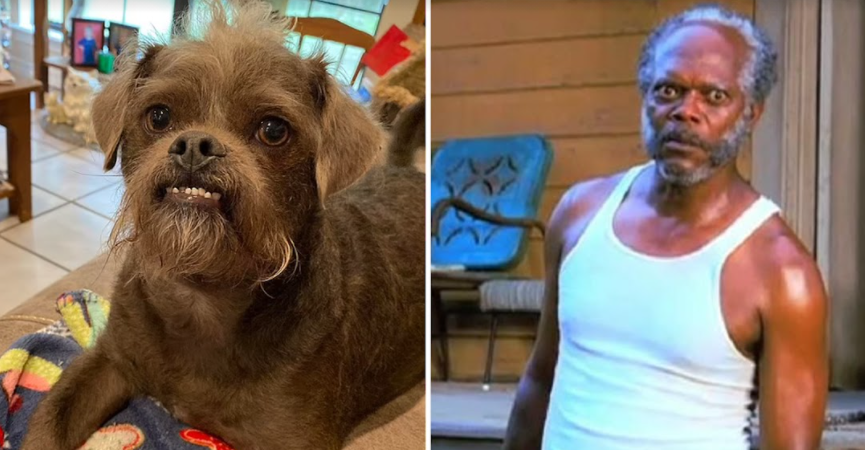 screenshot 2021 09 21 234556.png - Samuel L. Jackson As A Dog! Mississippi Couple Has A Dog That Made People Fall In Love With Him