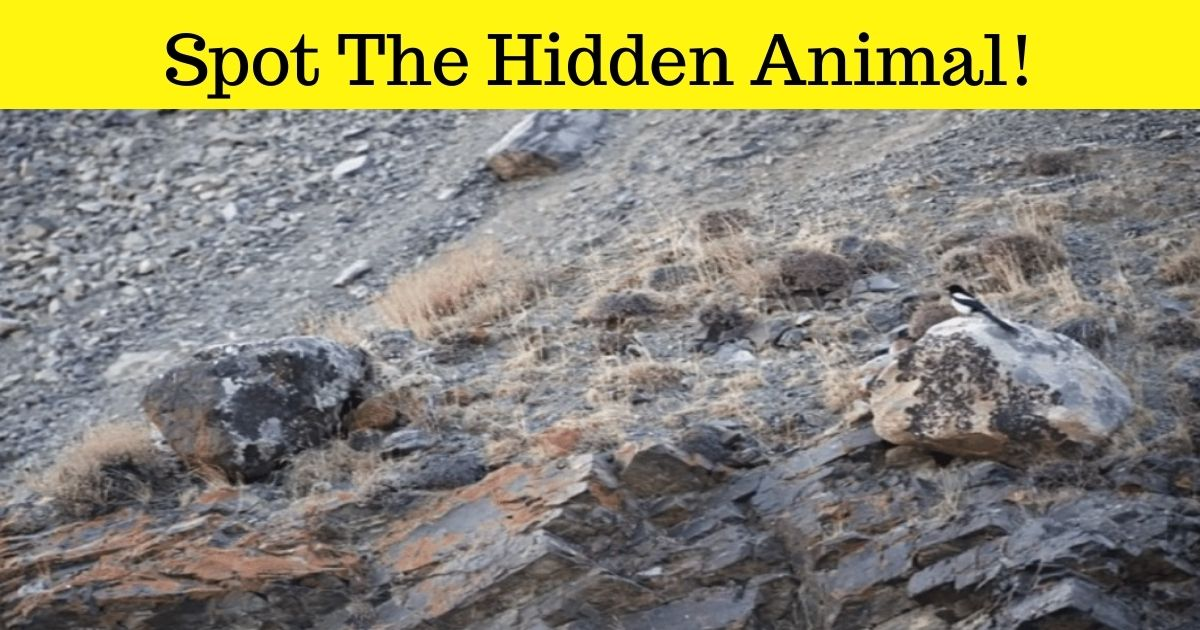 spot the hidden animal.jpg - How Fast Can You Spot The Hidden Animal In This Photo? It's Very, Very Big!