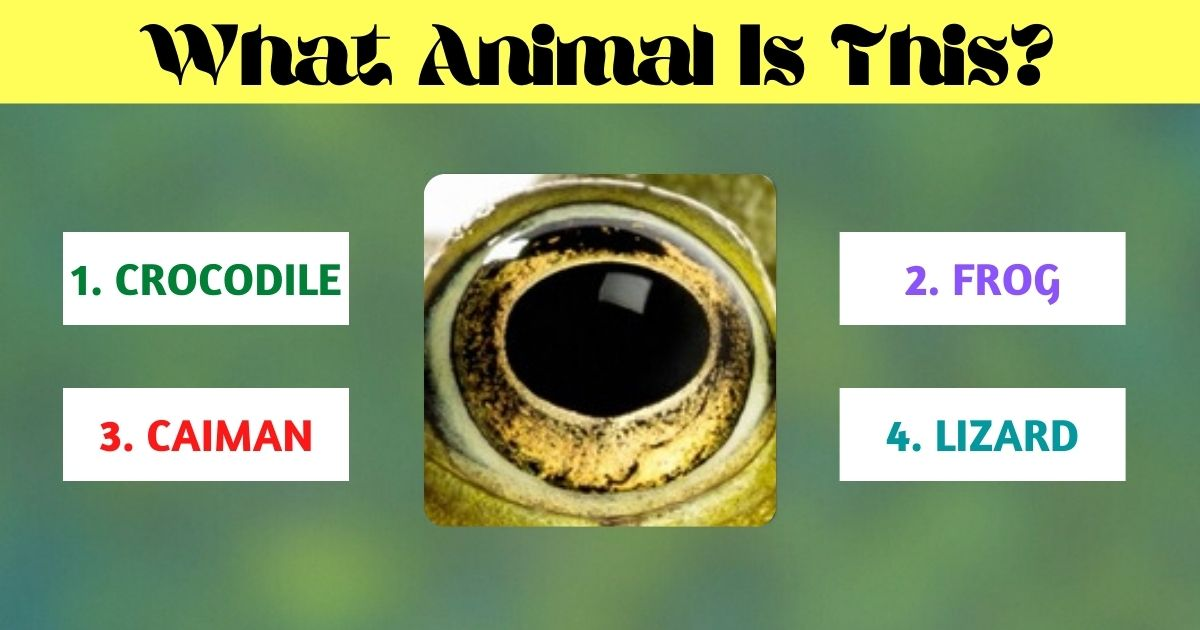 what animal is this.jpg - What Animal Does This Eye Belong To? Think Twice Before Answering!