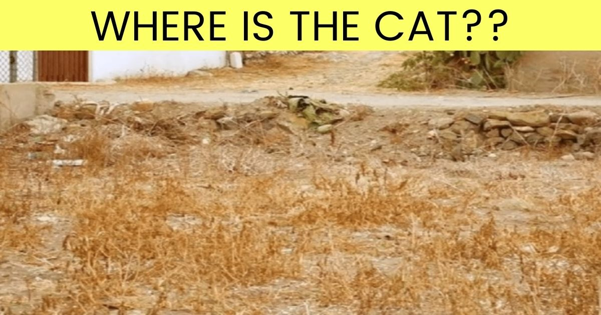 where is the cat.jpg - 90% Of People Can't Find The Cat In This Photo - But Can You Beat The Odds?