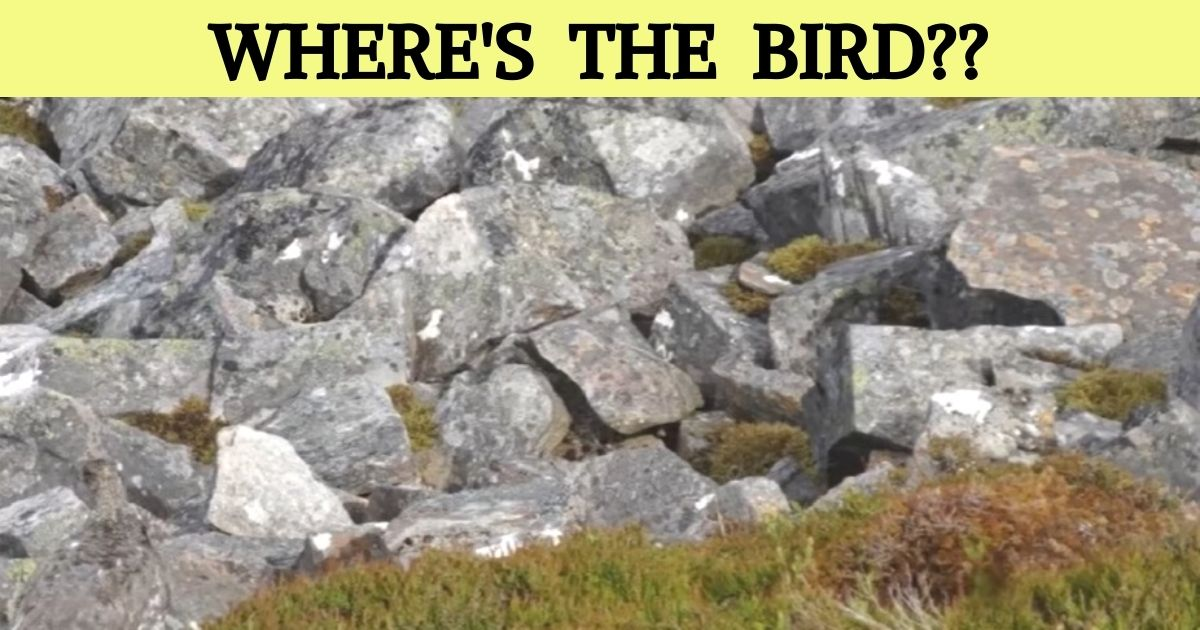 wheres the bird.jpg - Find The Hidden Bird In 10 Seconds! Only 1 Out Of 10 People Can Spot The Animal