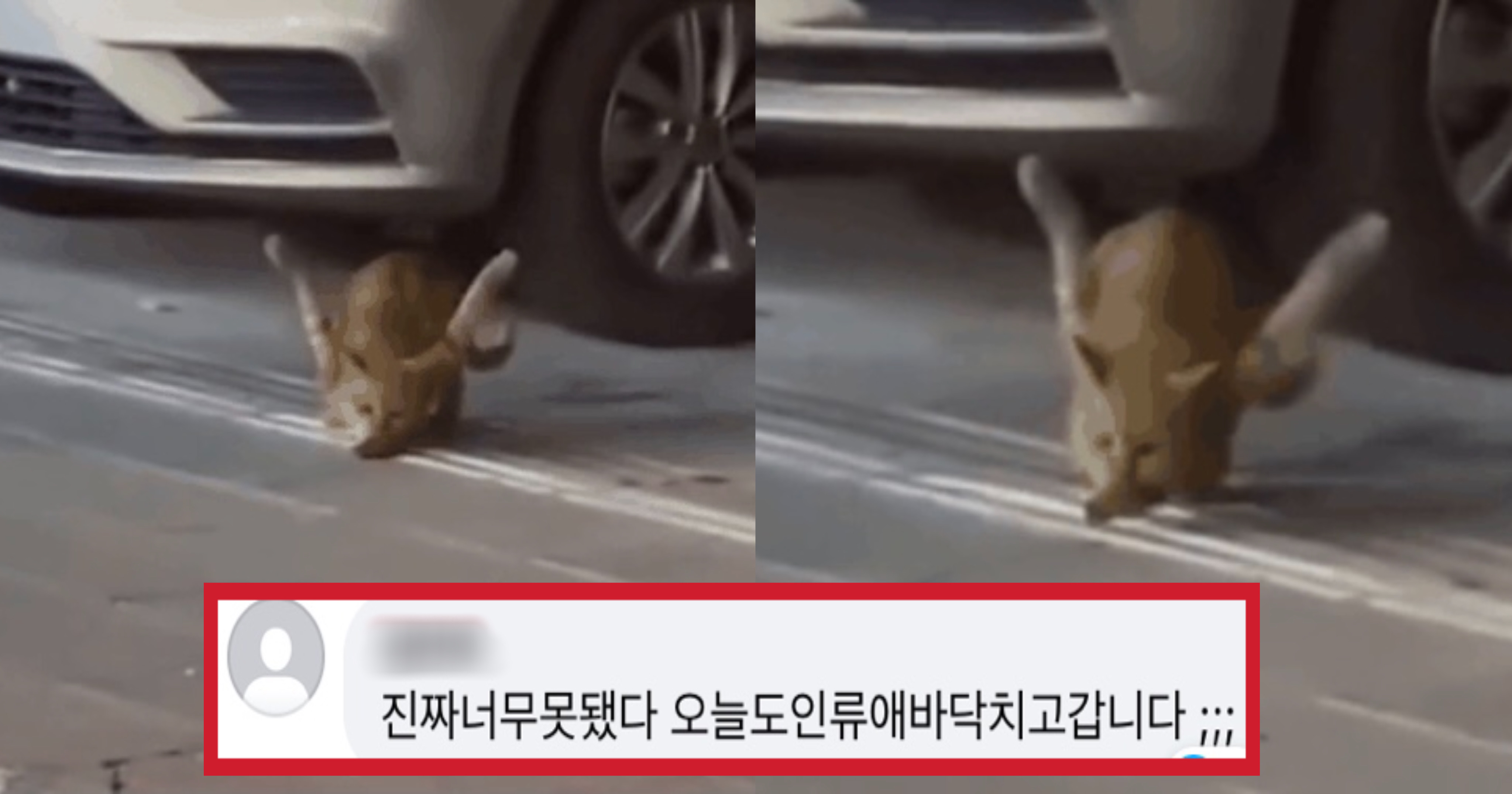 "3fff2bc1 0538 4704 9f50 d5c2349bc89e.jpeg - ""길 가는데 앞다리 두 개가 모두 바깥으로 꺾여 있는 고양이를 발견했어요"""