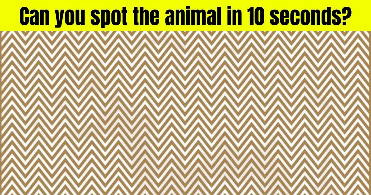 bear4 1.jpg - There Is A HUGE Animal Hiding In This Picture! Can You Spot It?