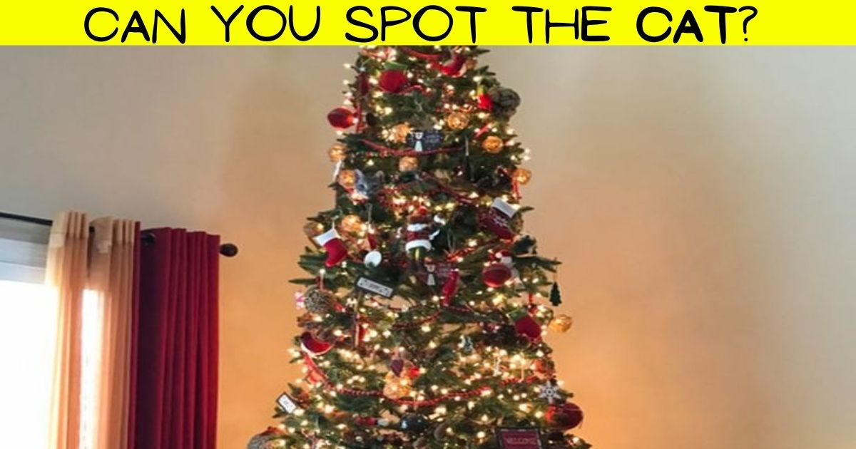 cat4.jpg - Most People FAIL To Spot The Cat Hiding In A Christmas Tree! But Can You Find The Adorable Feline?