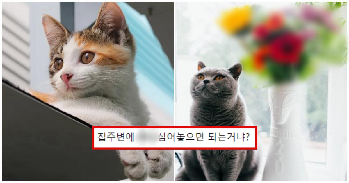 collage 201.png - 고양이를 죽음에 이르게 한다는 '치명적인 꽃'