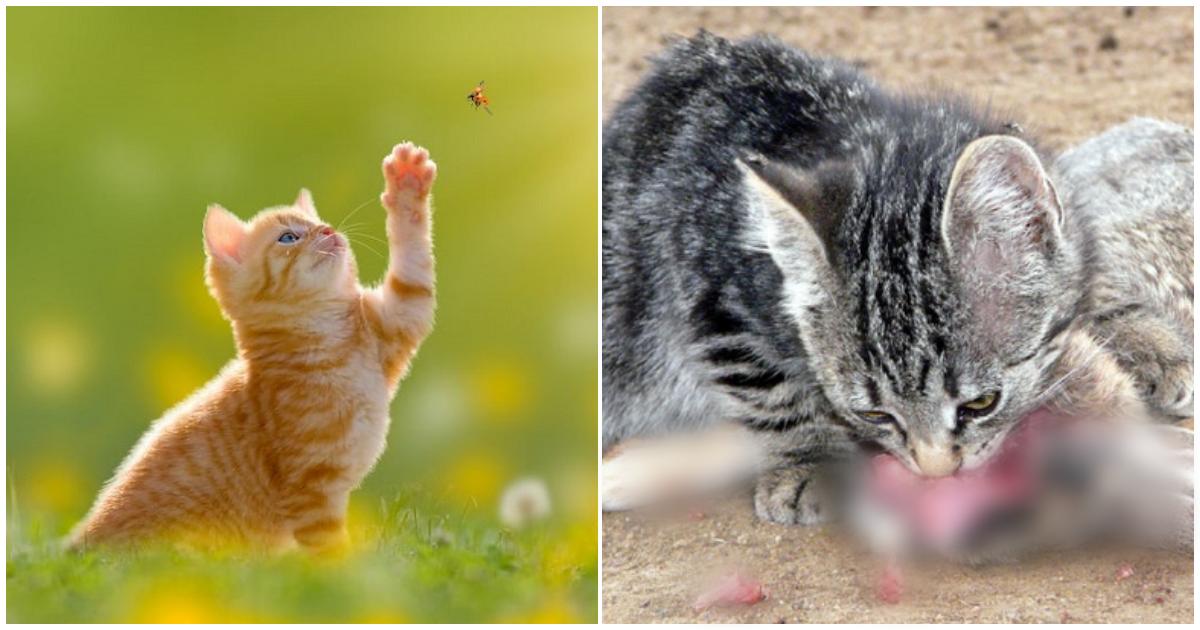 collage 274.png - 사냥에 재미붙인 한마리의 고양이가 멸종시킨 동물