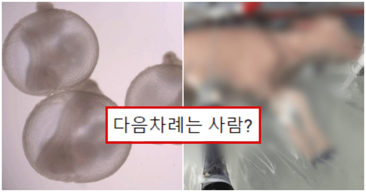 collage 275.png - 저출산 해결의 열쇠 '인공자궁'의 개발 연구 현황
