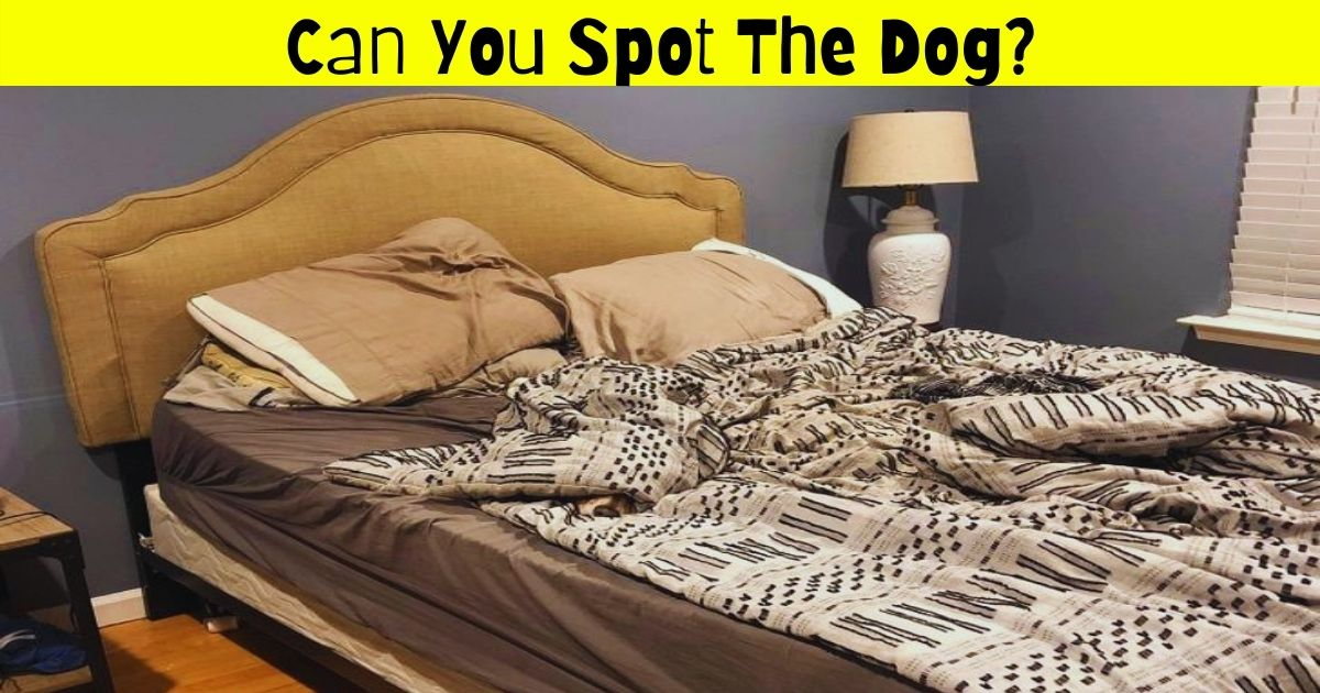 dog4 1.jpg - Can You Spot The Dog Hiding In This Picture? 9 Out Of 10 People Fail To Find The Adorable Pooch!
